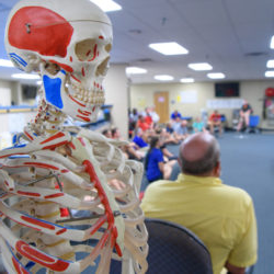 a human skeleton model stands in focus in front of a health sciences class