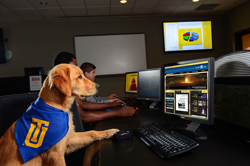 该 University of Tulsa's Canine Ambassador 走ldie looking at a computer